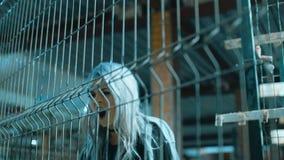 Boze rots - en - broodjesmeisje in slowmotion, stock footage