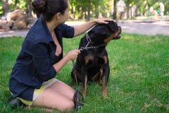 Boze Rottweiler op een leiband Stock Foto's
