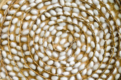 Bozzoli del baco da seta in nidi bianchi Fotografia Stock