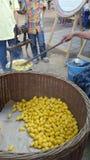 Bozzoli di seta pronti per la seta di filatura Fotografia Stock Libera da Diritti