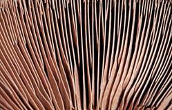Brânquias do cogumelo Fotografia de Stock
