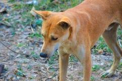 Brąz barwiąca ulica psa pozycja obraz stock