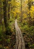 Brädgångar på höstskog Arkivbilder