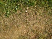 Bränd gräsbakgrund för dig Arkivbilder