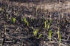 bränd jord Fotografering för Bildbyråer