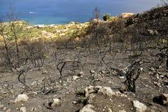 Bränd miljö i brand på den Grekland kustlinjen arkivbilder