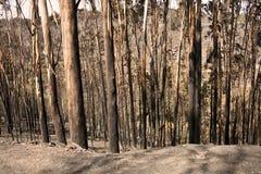 Bränd skog Royaltyfria Foton