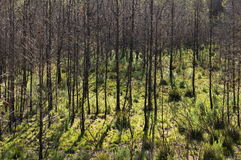 Bränd skog royaltyfri foto