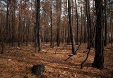 bränd skog Fotografering för Bildbyråer