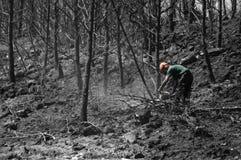 bränd skog royaltyfria bilder