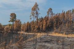 Bränd skog i Portugal Skog royaltyfri foto