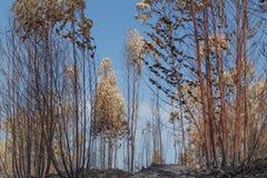 Bränd skog i Portugal skog bränd skog Royaltyfri Foto