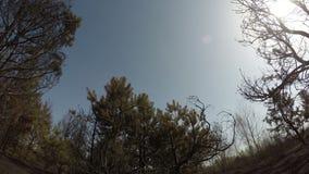 Bränd skog, roterande tidschackningsperiod för panorama av träd efter löpeld, ekologisk katastrof, katastrof arkivfilmer