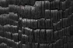 Bränd svart trädstam som utställningen som ska alarmeras mot förstörelse av skogar vid brand royaltyfri foto