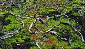 Bränd vegetation rotar på berget Royaltyfri Bild
