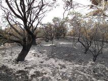 Brända kala träd inom det Barron landskapet royaltyfri foto
