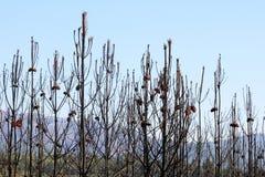 brända portugal för naturlig park spruces arkivbild