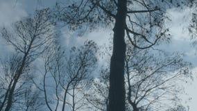 Brända träd efter brand såg underifrån lager videofilmer