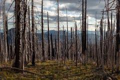 Brända träd efter löpeld under solnedgång arkivfoto