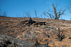 Brända träd på bergssidan efter förödande brand royaltyfri foto