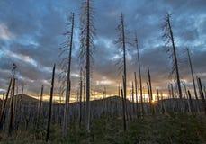 Brända trädstammar och solnedgång i mörk molnig dag fotografering för bildbyråer