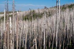 brända trees Arkivbilder