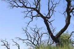 Brända trees arkivfoton