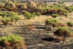 brända trees royaltyfria bilder