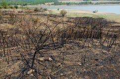 Brända växter och jord Arkivfoto