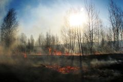 Bränna av sugrör på fältröken, brand royaltyfri fotografi