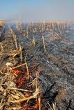 Brännande biomassa - brand för havrefält royaltyfria foton