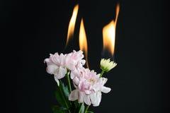 Brännande blommor Royaltyfria Foton