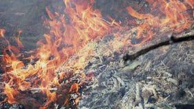 Brännande brasa av torra filialer lager videofilmer