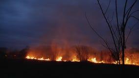 Brännande gräs och träd på skymning arkivfilmer