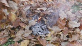 Brännande höstlövverk arkivfilmer