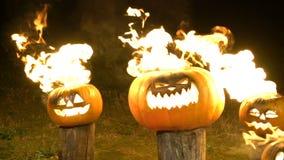 Brännande halloween pumpor på träd loggar in mörker, fältet, mist, skymning Läskig rolig ilsken stor orange pumpa utandas brand stock video