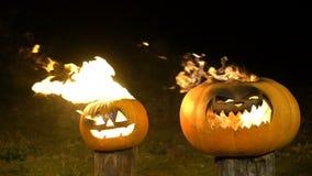 Brännande halloween pumpor på träd loggar in mörker, fältet, mist, skymning Läskig rolig ilsken stor orange pumpa utandas brand arkivfilmer