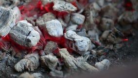 Brännande kol, glödande kolbakgrund stock video