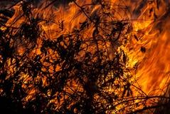 brännande leaves Arkivbilder
