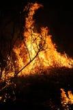 Brännande torkat gräs Arkivfoton