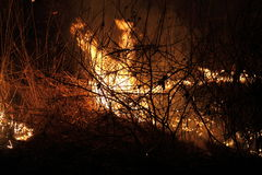 Brännande torkat gräs Royaltyfri Fotografi