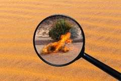Br?nnande torr buske i den Sahara ?knen arkivbilder