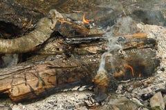 Brännande trä i branden som skilja sig från av turister royaltyfria foton