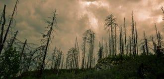 brännd skog Arkivfoto
