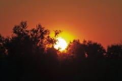 Brännhet Camargue solnedgång royaltyfri bild