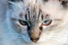 brännhet katt Arkivbild