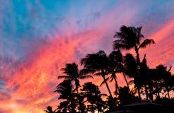 Brännhet tropisk solnedgång med de svarta konturerna av palmträd i Hawaii Arkivbild