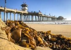 Bränningstad, CA strand och pir längs Stilla havet royaltyfri foto