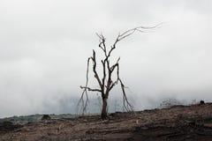 Bränt dött träd Royaltyfri Bild