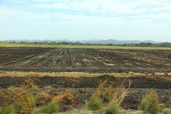 Bränt sockerrörfält arkivbilder